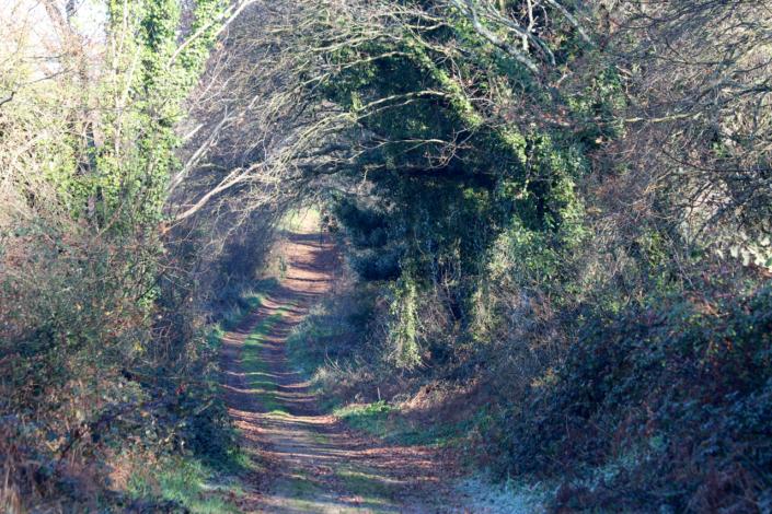 Camiño de Santiago-Vía da Prata entre Piñeiro e Angrois