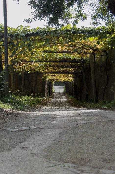 Tramo do Camiño de Santiago-Via da Prata ao seu paso polo lugar de Piñeiro